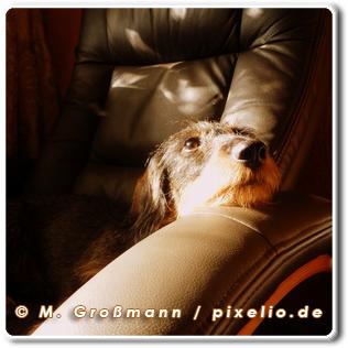 © M. Großmann / pixelio.de
